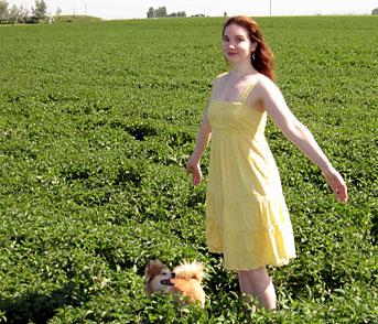 Peppermint Tummy Tea Fields
