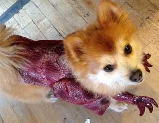 Turner - Canine Executive Officer of HelpForIBS.com